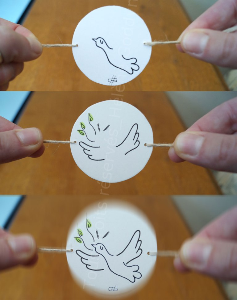 au-fil-de-la-vie-pour-en-tracer-l-essentiel_helene-goddyn_thaumatrope-ou-roue-a-miracle-oiseau