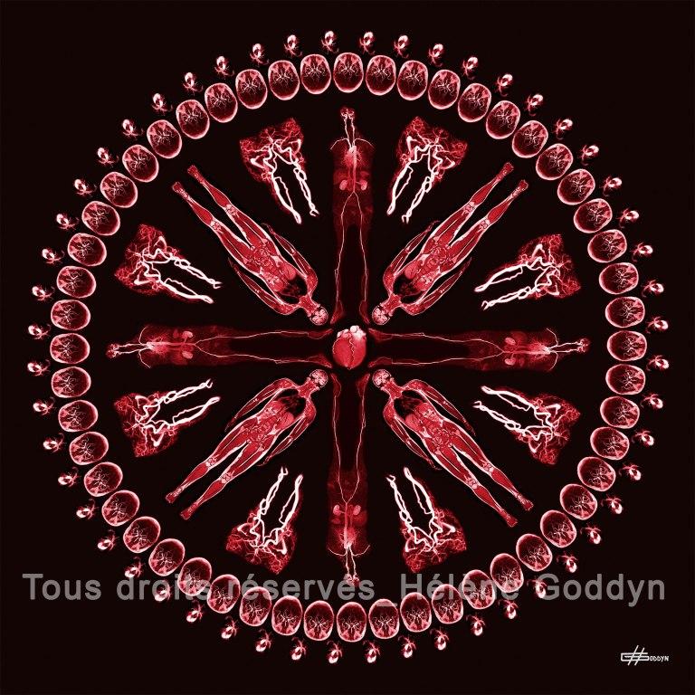 Mandala-Humain-VEINE_Helene-Goddyn