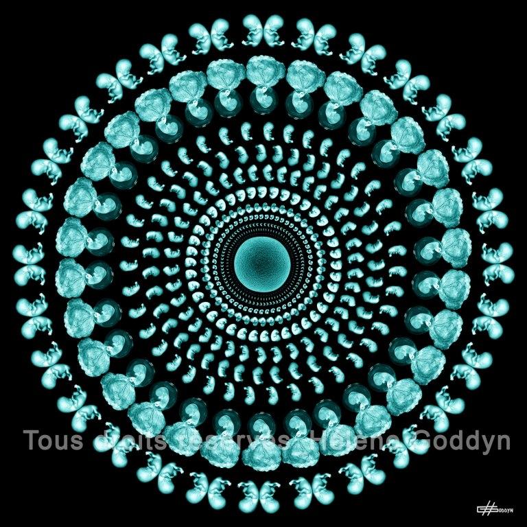 Mandala-Humain-WONDERFUL-LIFE_Helene-Goddyn