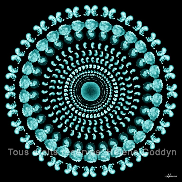 Mandala-Humain-WONDERFUL-LIFE_Helene-Goddyn